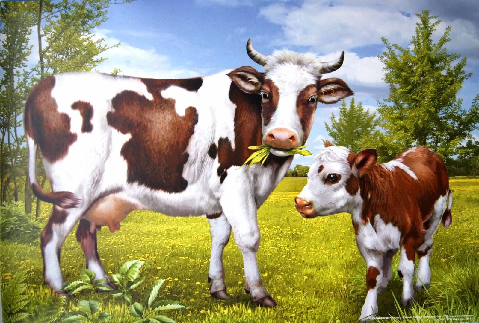 Корова и теленок - Сюжетные картинки - Картинки - Альбомы ...